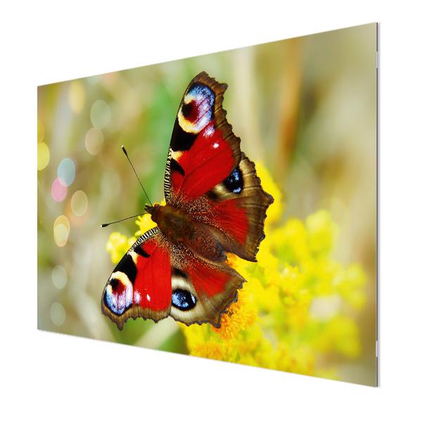 Glasbildheizung Motiv 006 Schmetterling