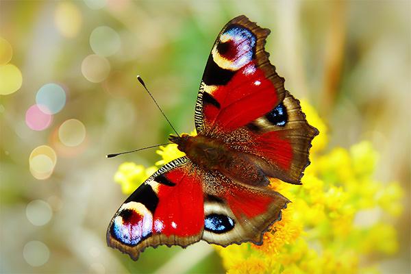Bildheizung Motiv 006 Schmetterling