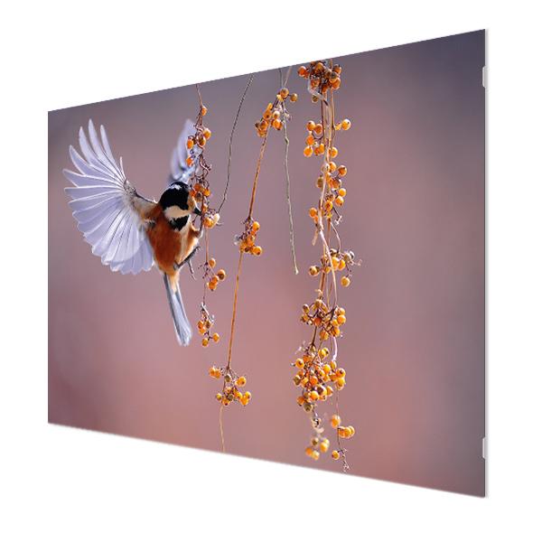 Glasbildheizung Motiv 005 Vogel